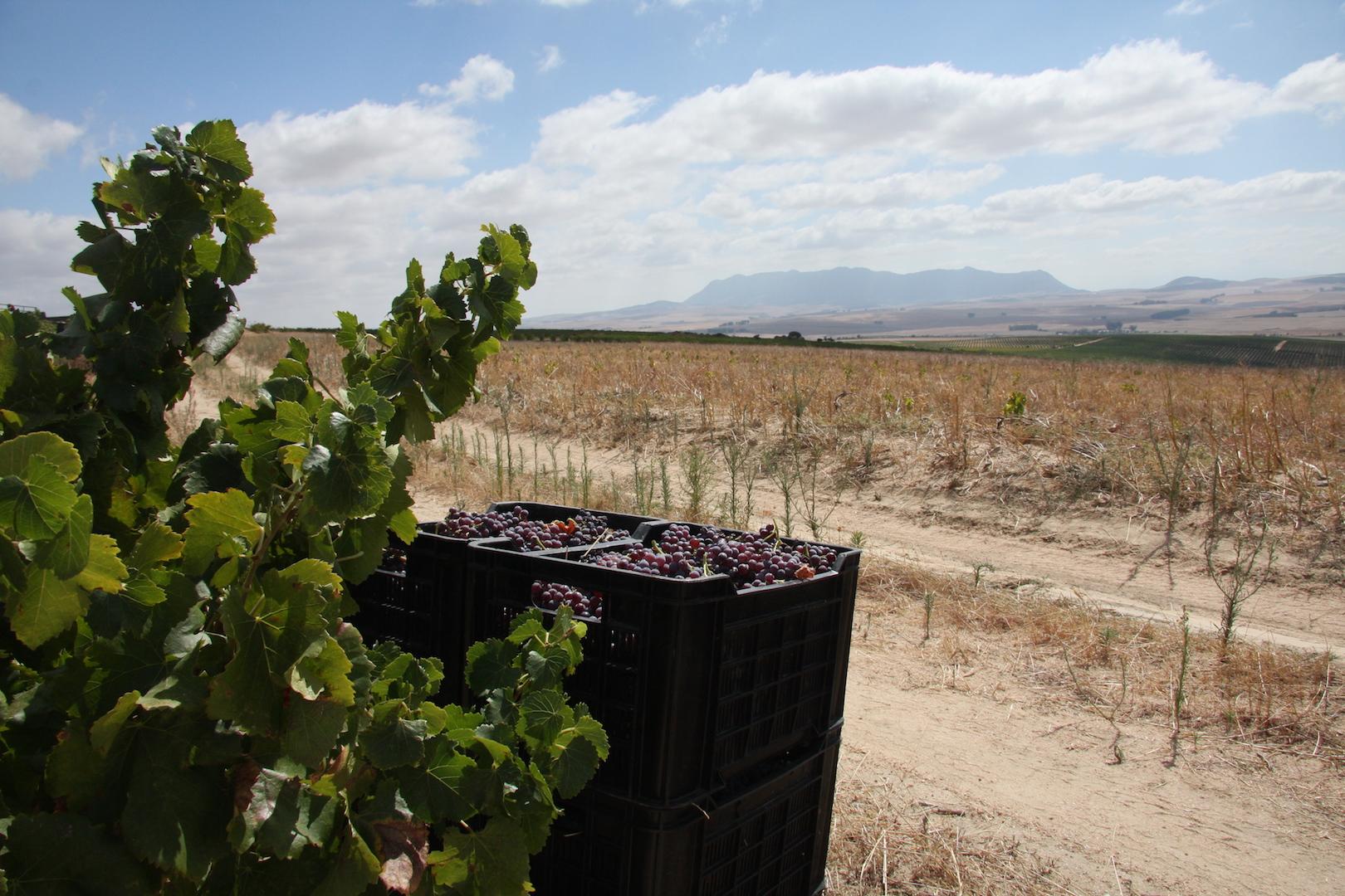 Wildehurst Wines