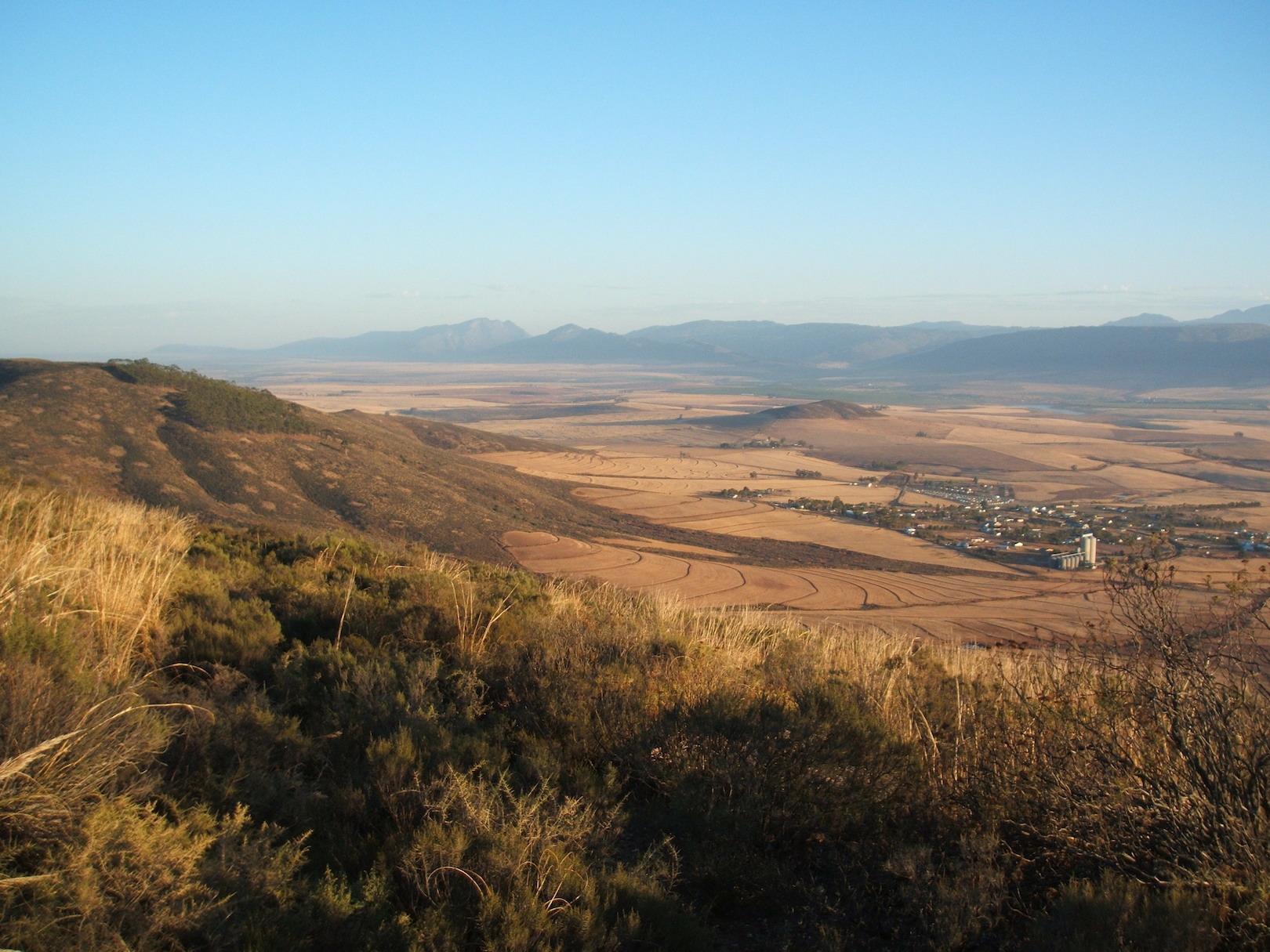 Wildehurst Wines Koringberg